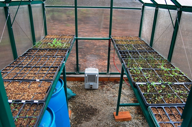 Greenhouse Just Checking In About The Seed Starting