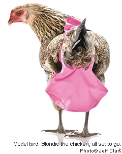 Chicken-diapers