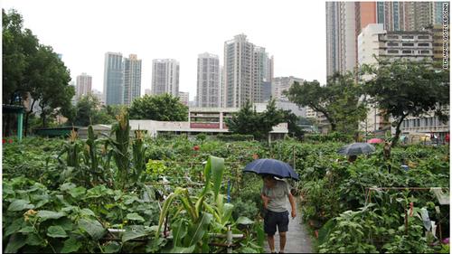 「hong kong farm」的圖片搜尋結果